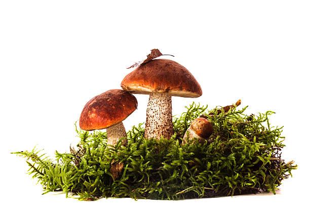 Orange-cap Steinpilz-Pilzen – Foto