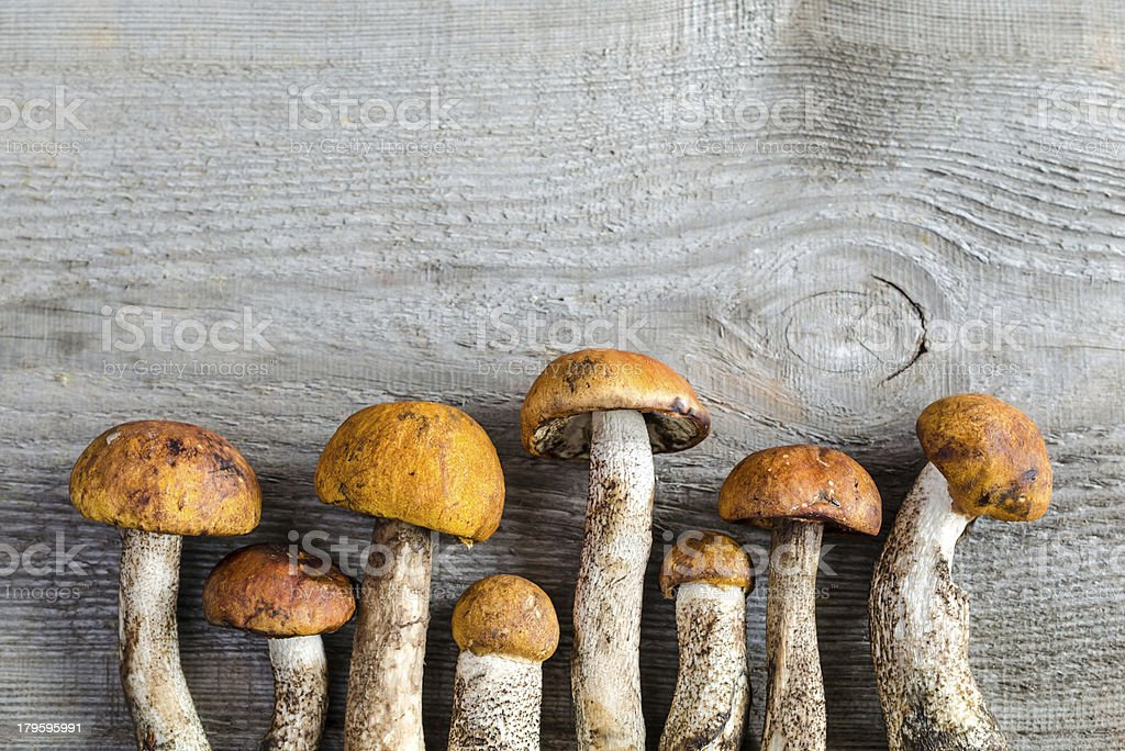 orange-cap boletus mushrooms stock photo