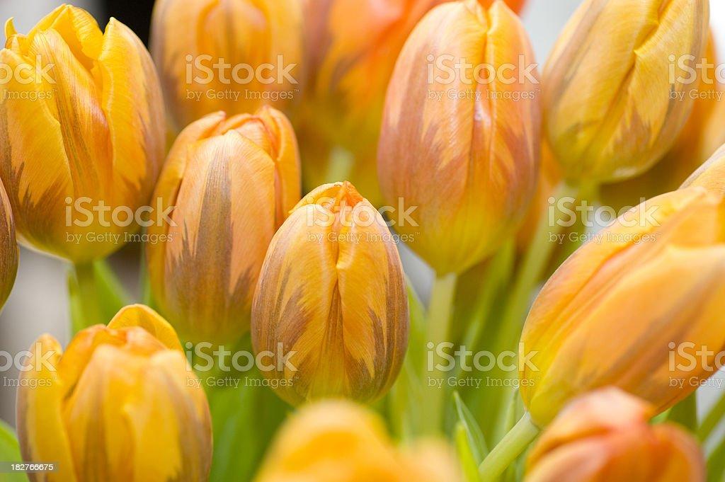 orangener Tulpenstrauss royalty-free stock photo