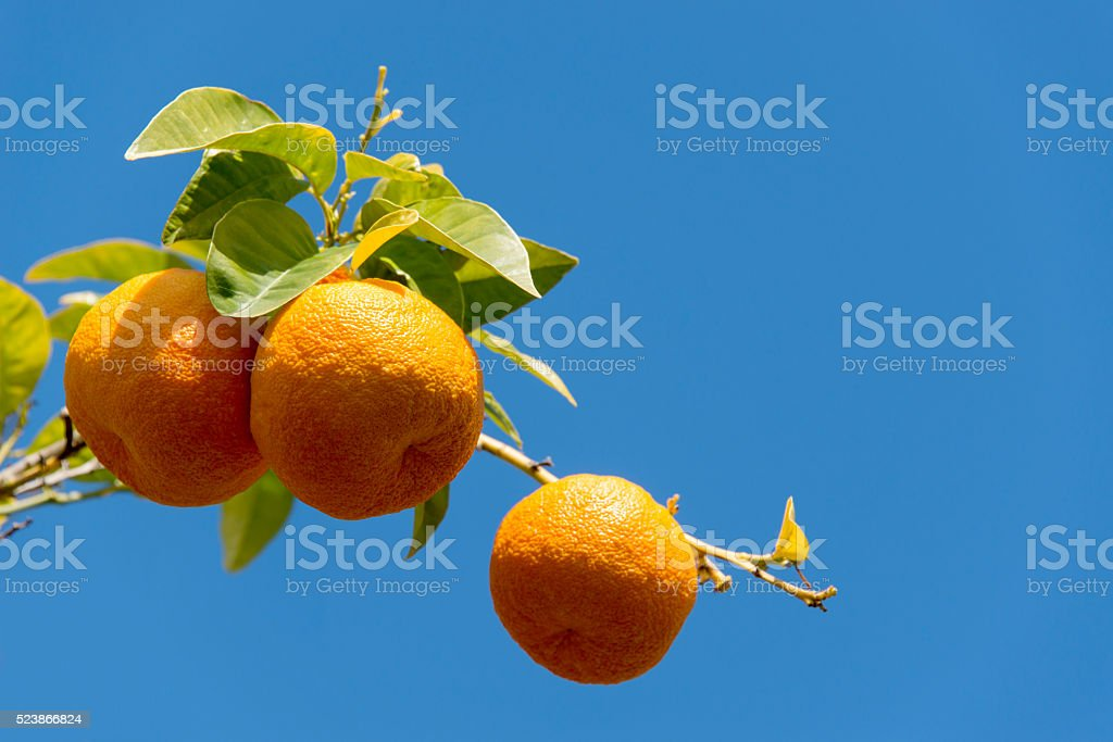Oranges against a blue sky