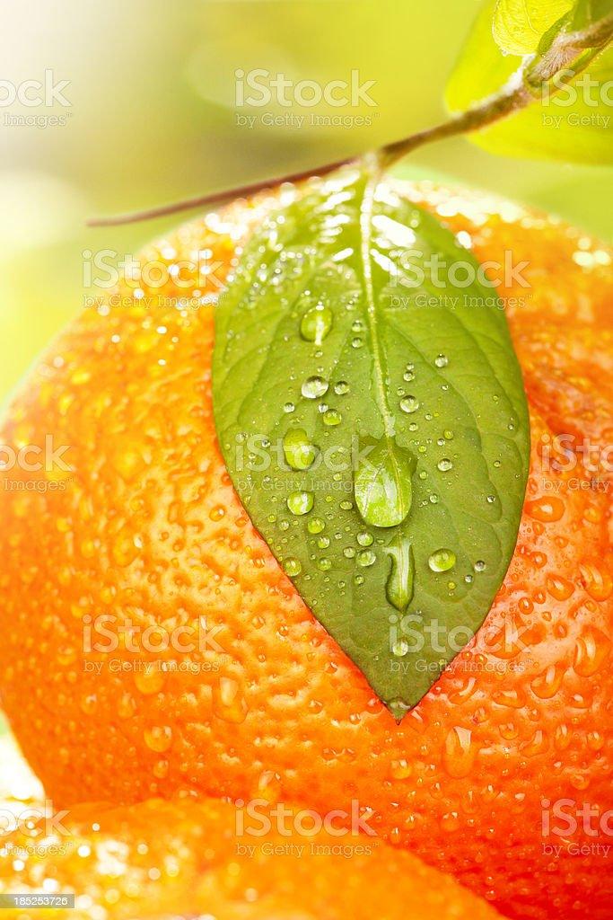 Oranges and leaf stock photo