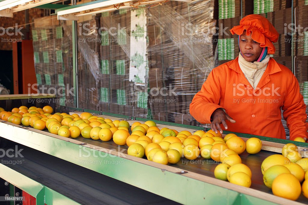 Oranges on Packing Line stock photo