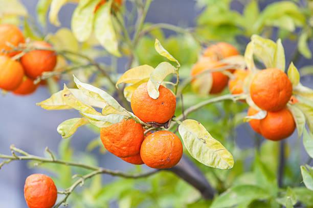 Orange – Foto