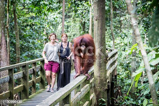 Women next to an orangutan from Borneo in the Sepilok nature reserve, Malaysia