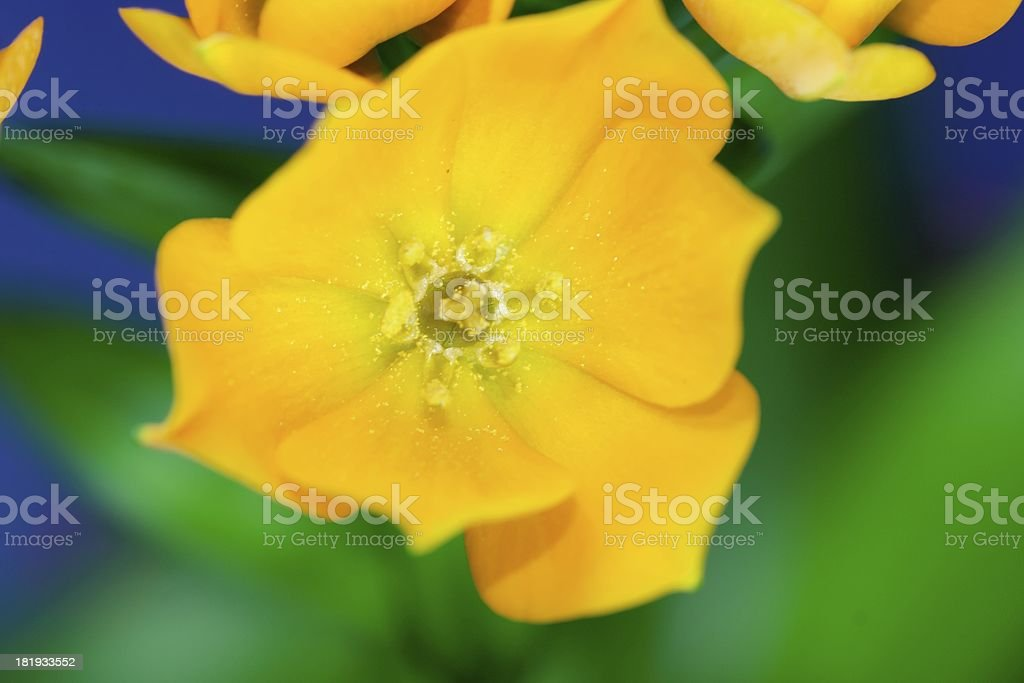 Oranjezicht stock photo