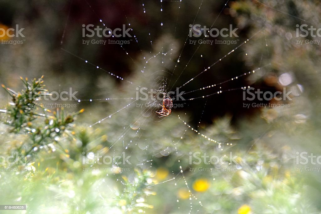 Orb Spider stock photo