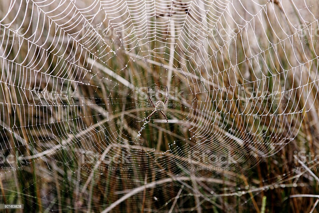 Orb spider's web stock photo