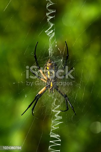 Orb-weaver spider along the Holston River in East, TN.