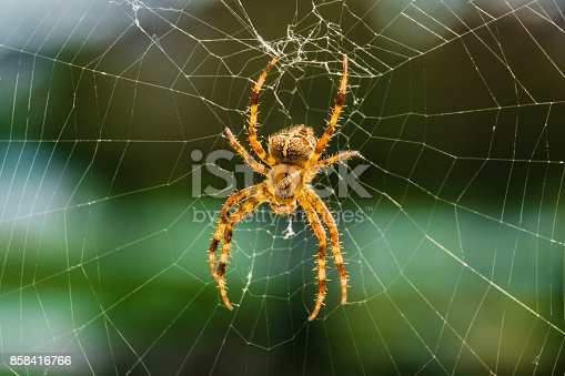 Orbweaver spider sitting on the web