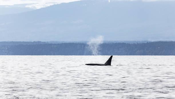 Orca Nebel – Foto