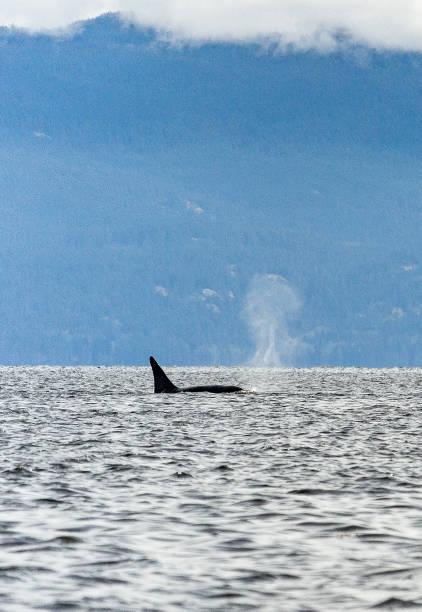 Orca-Spray-Portrait – Foto