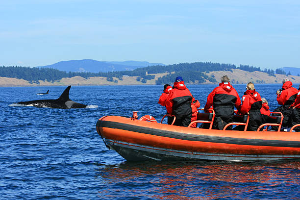 Orca Whale Watching Tourists on Zodiac Boat Canada stock photo