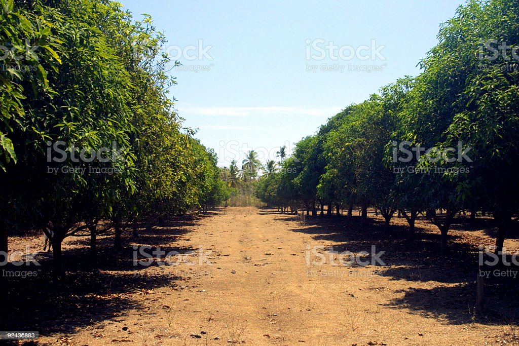 orchard 1 royalty-free stock photo
