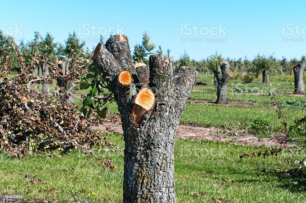 Orchard Destruction royalty-free stock photo