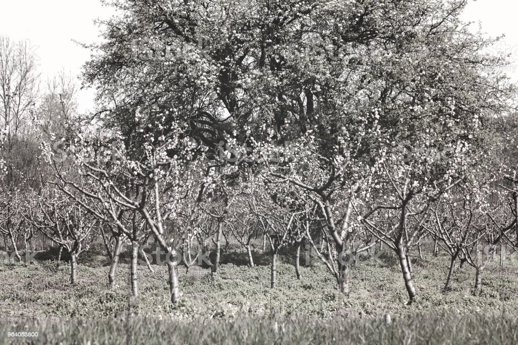 orchard in autumn - Royalty-free Agricultural Field Stock Photo