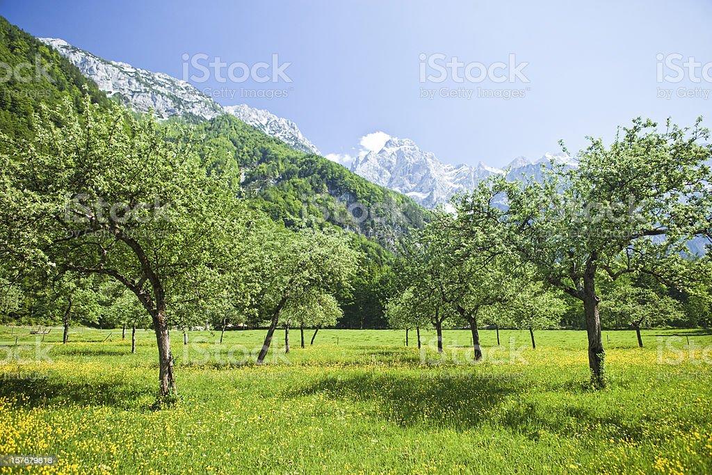 Orchard in idyllic Alps valley Logarska dolina royalty-free stock photo