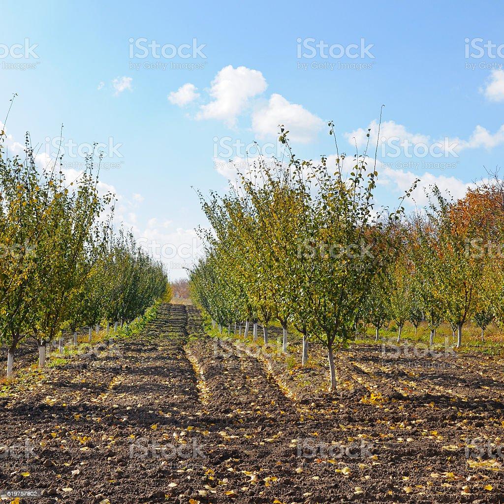 orchard in the autumn after  harvest - foto de acervo