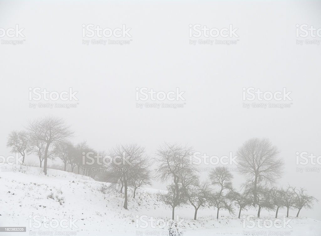 Orchard in Winter royalty-free stock photo