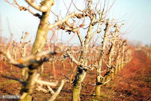 istock Orchard in winter 917205978
