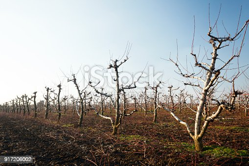 istock Orchard in winter 917206002