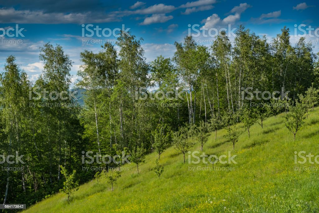 Orchard on a sloped field royalty free stockfoto