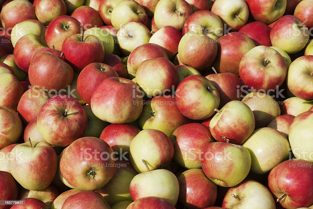 Orchard # 115 royalty-free stock photo