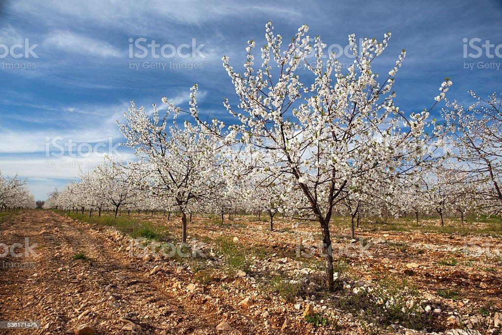 Orchard stock photo