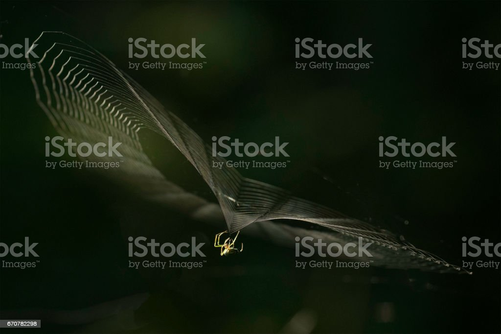 Orchard Spider Spinning stock photo