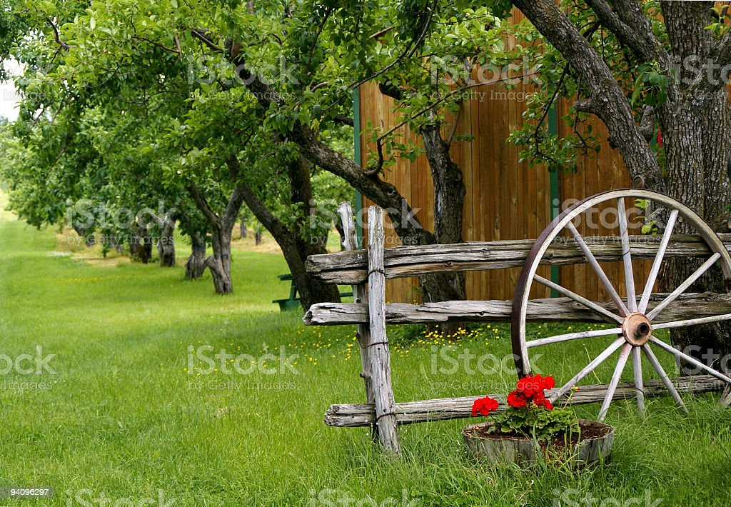 Orchard with Wagon Wheel royalty-free stock photo