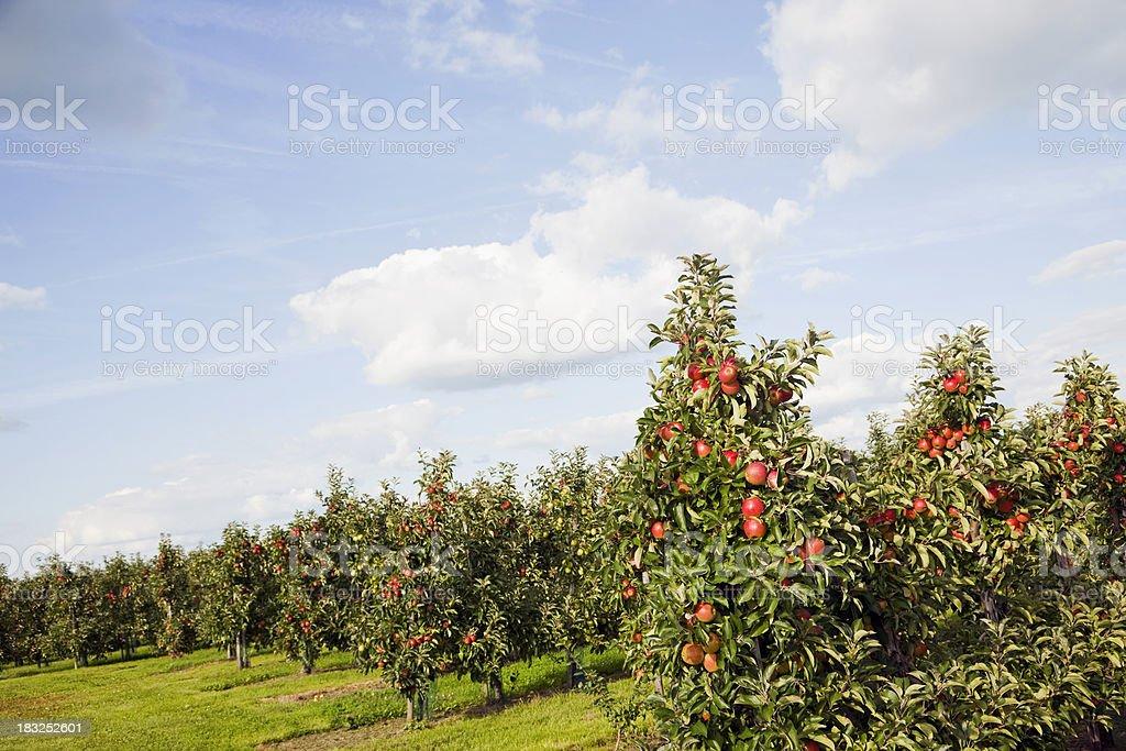 Orchard # 110 XXXL stock photo