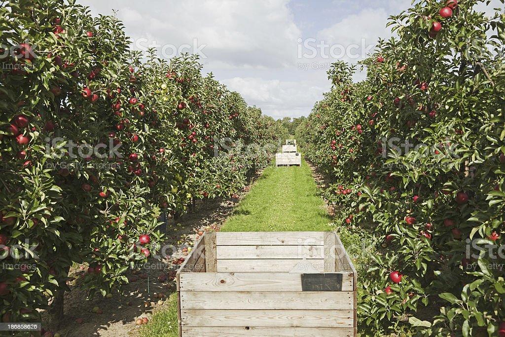 Orchard # 98 XXXL royalty-free stock photo