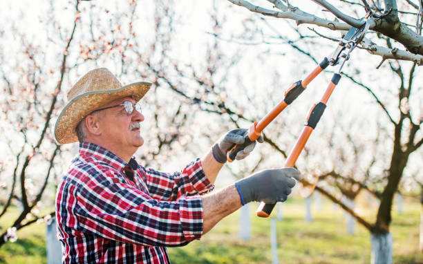 Orcharding. Senior man pruning tree with a shears in the orchard. Hobbies and leisure, agricultural concept stock photo