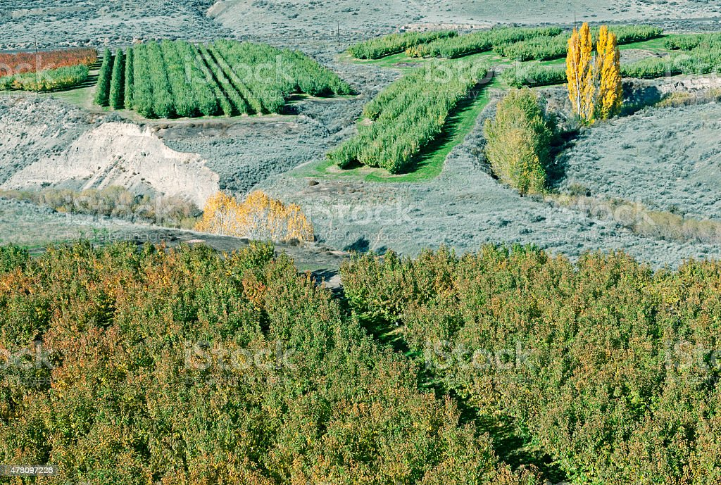 Orchards after autumn harvest in central Washington state stock photo