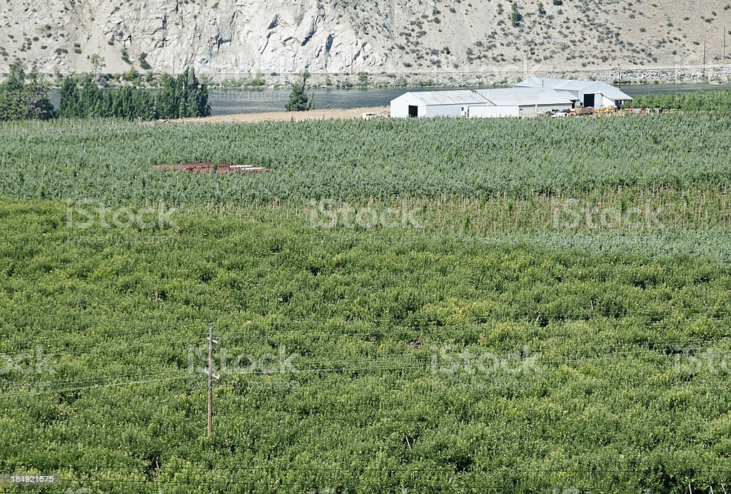 Orchards and processing plant in central Washington state royalty-free stock photo