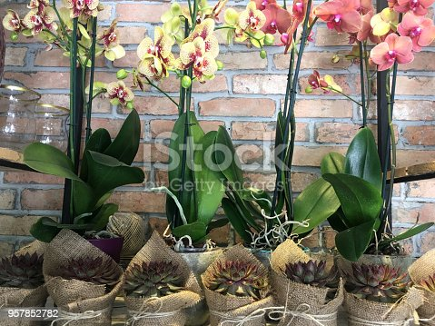 Orchid and suculent