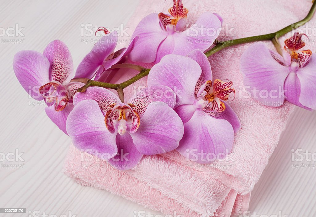 Orchid and towel stock photo