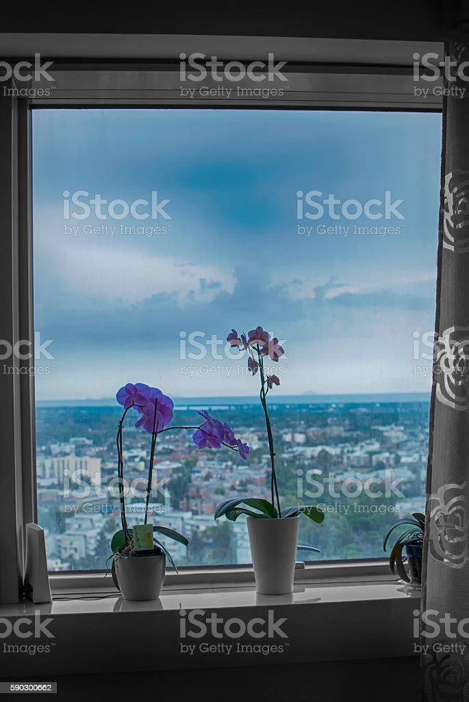Орхидея на окно Стоковые фото Стоковая фотография