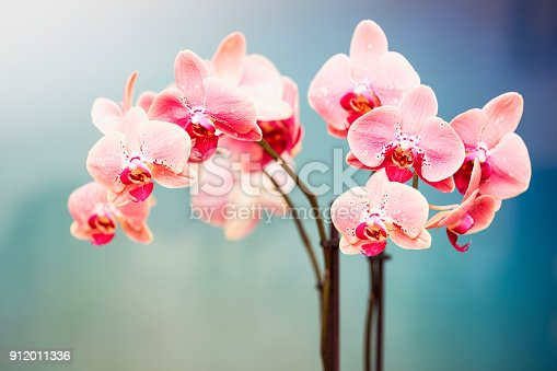 Orchid Background on blurred background