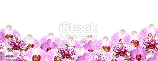 Orchid border on white also available in black