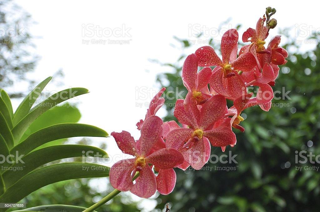 Orchid, Dendrobium, Bulbophyllum, Epidendrum stock photo