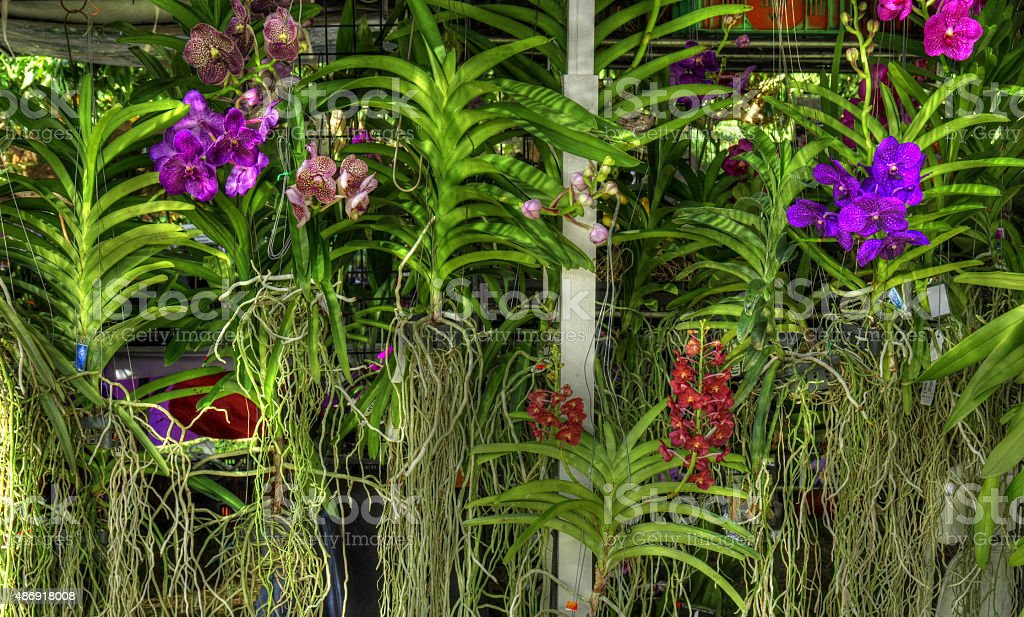 Orchid Display stock photo