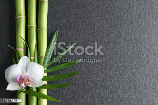 orchid flower and bamboo on the black