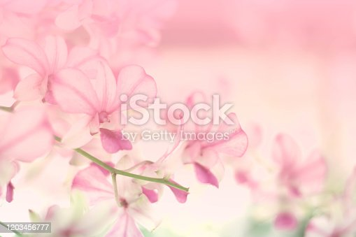 orchid flower blooming background