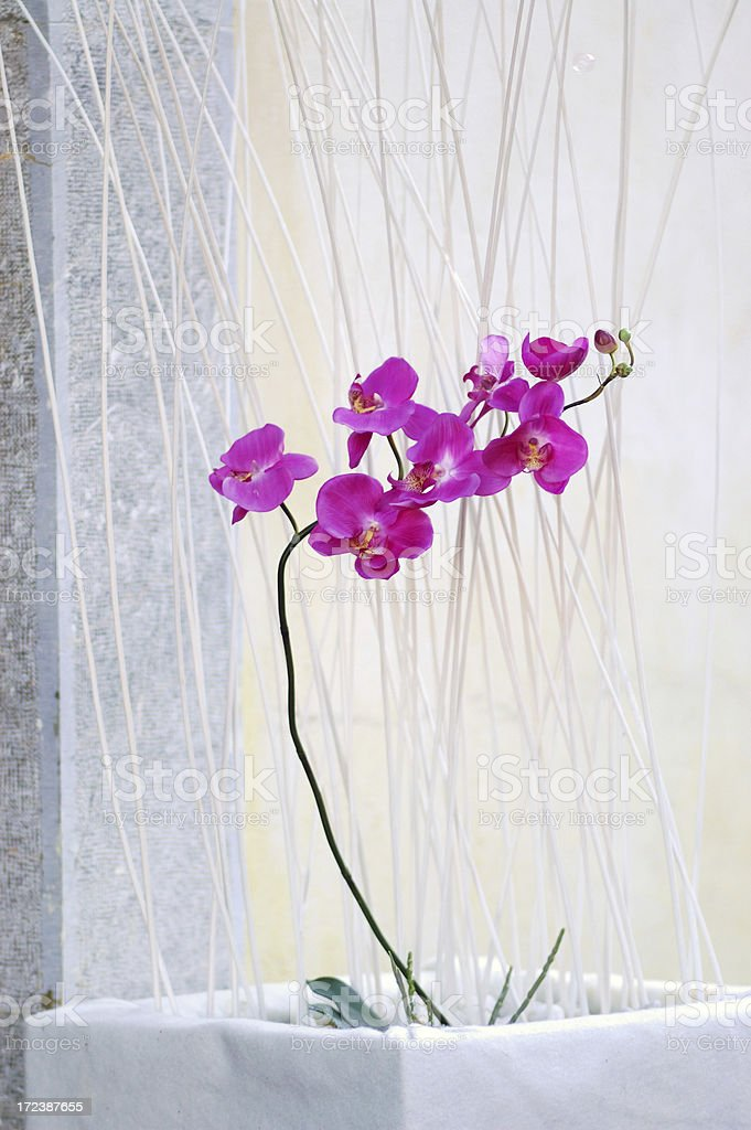 Orchid Flower Decoration royalty-free stock photo
