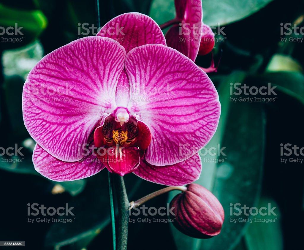 Photo libre de droit de Orchidée Fleur De Jardin Cru Processus De ...
