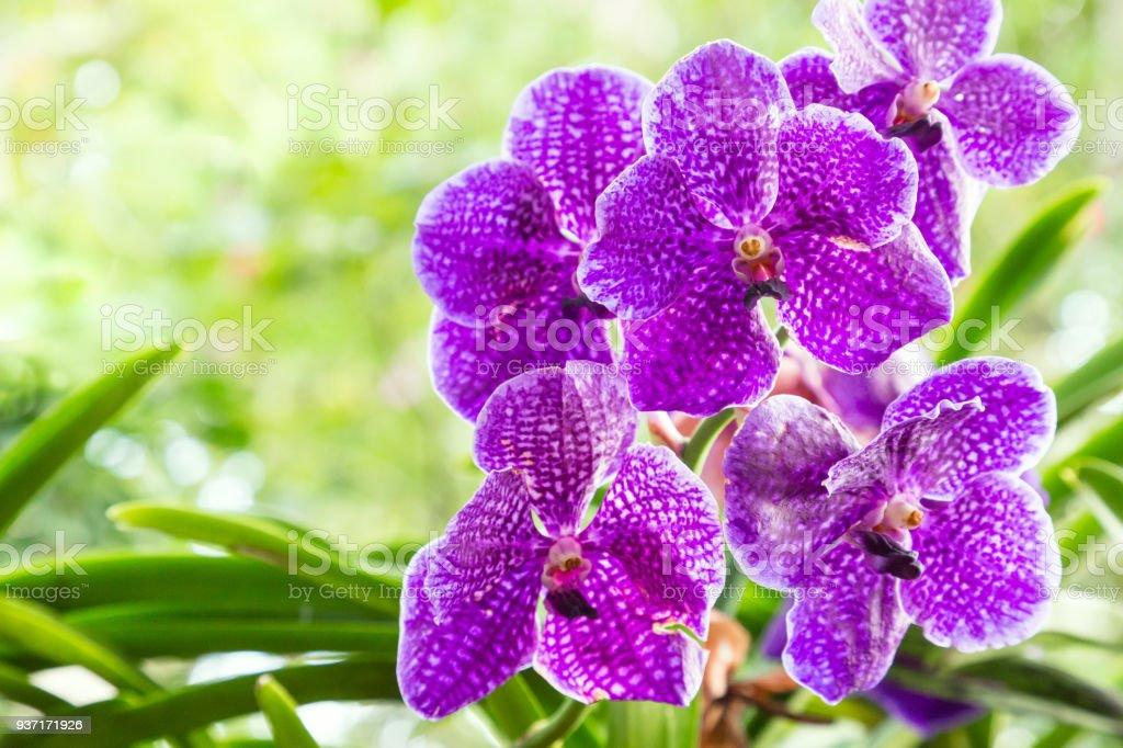 Fleur Dorchidée Au Jardin Dorchidées Au Jour Dhiver Ou De Printemps ...
