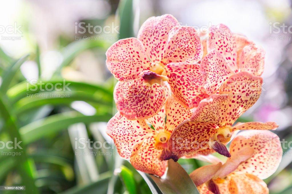Photo libre de droit de Fleur Dorchidée Au Jardin Dorchidées ...