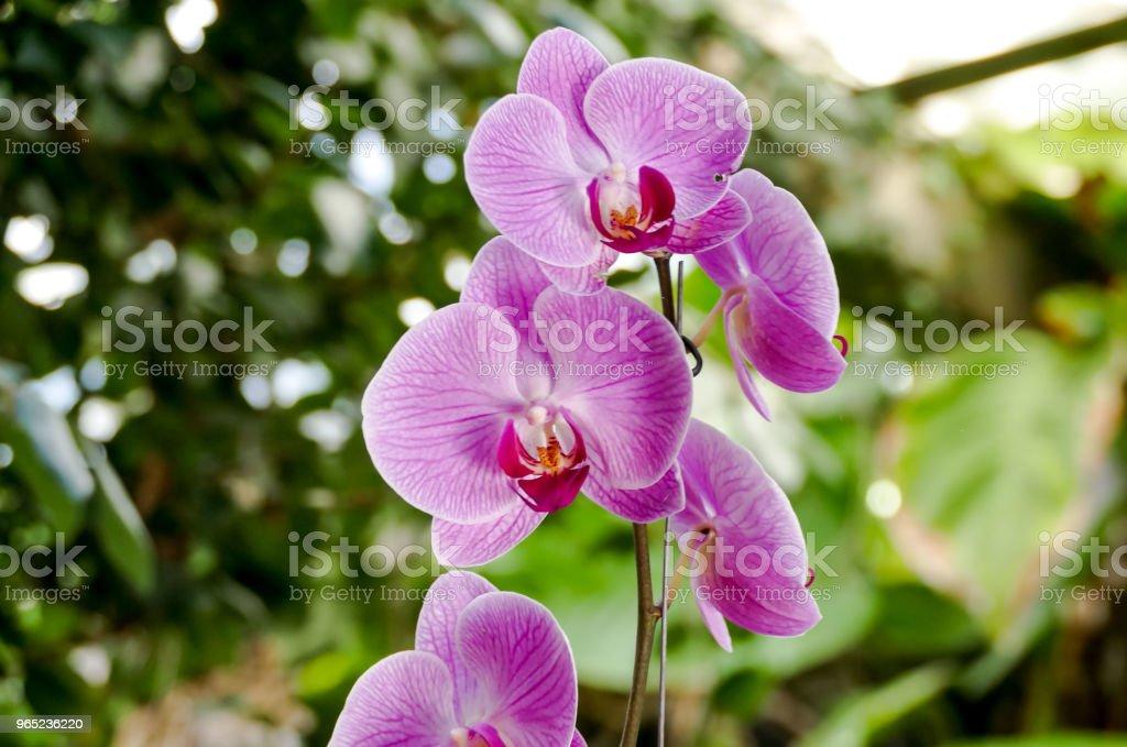 Orchid flower in tropical garden zbiór zdjęć royalty-free