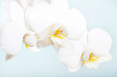 istock Orchid Flower 1248262772