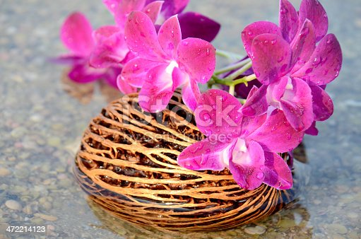 Sea water drop on purple orchid flower with natural brown seed at the shell beach.